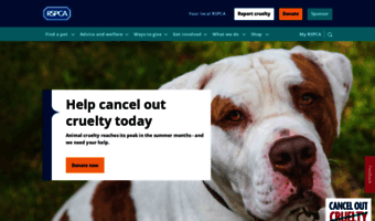 Image of: Animal Cruelty Rspcaorguk Rspcaorguk Observe Rspca News The Largest Animal Welfare